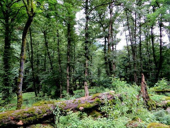 Photo of جنگل دالخانی بهشت رامسر