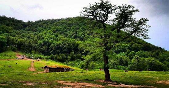 جنگل دالخانی بهشت رامسر